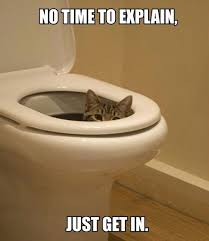 Meme Toilet - cat hung over toilet seat drinking from toilet bowl justpost