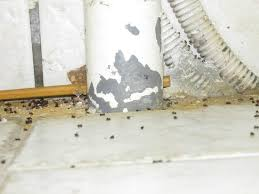 fourmis cuisine fourmi trouvé sous l évier de cuisine photo de magny le hongre