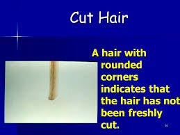 how to cut hair with rounded corners in back hair analysis forensic science ppt video online download