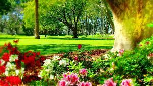 flower places flower park sydney time flowers places colors nature