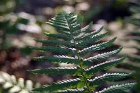 free images nature branch green evergreen botany fir flora