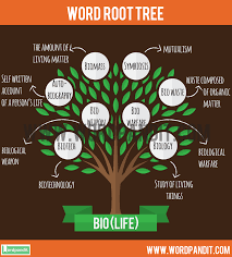 biography definition and characteristics know about bio root word and words based on this root bio