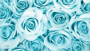 teal roses photo collection wallpaper blue roses
