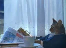 Cat Meme Boat - i should buy a boat cat meme generator imgflip
