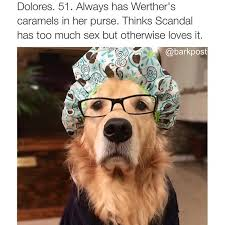 Hipster Dog Meme - 15 dogs who are probably head of the pta