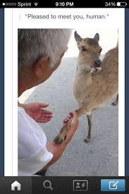 Oh Deer Meme - oh deer meme by ballshake205 memedroid