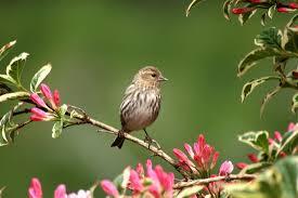 animals birds photography by photodsbrady com