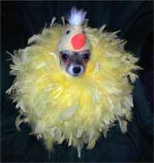 Small Dog Halloween Costumes Cat Small Dog Halloween Costumes Sale