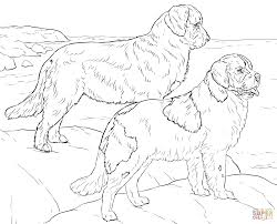 newfoundland dogs coloring page free printable coloring pages