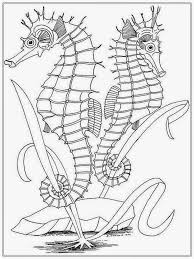 download coloring pages seahorse coloring page seahorse coloring