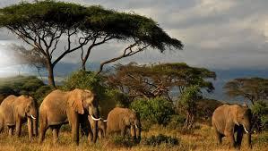 elephants amazing trees baby elephant backgrounds elephants hd