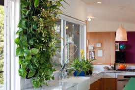 vertical indoor herb garden living walls how they can improve your home and your health