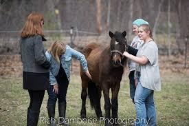 Massachusetts travel pony images Meet our ponies villi poni farm jpg