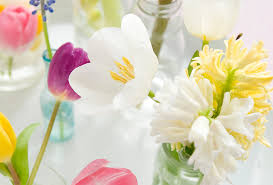 the flower bulb sector within an international perspective