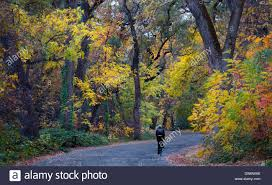 fall colors explode bidwell park chico california stock