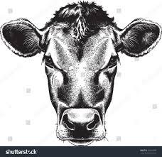 black white sketch cows face vector stock vector 165191597