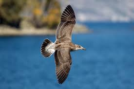 could a sea bird u0027s sense of smell be key to navigating the oceans