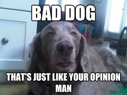 Bad Dog Meme - bad dog that s just like your opinion man 10 dog quickmeme