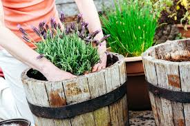 Advantage Of Raised Garden Beds - 14 reasons why raised beds are the best way to garden