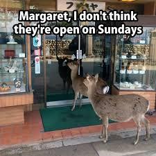 Oh Deer Meme - oh deer meme by mirinyan memedroid