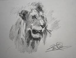 no lion dies quietly u201d keith andrew mcallister wildlife artist