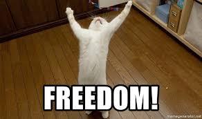 Freedom Meme - freedom praise the lord cat meme generator