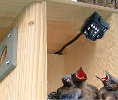 amazon com birdhouse spy cam bcamhehd hawk eye hd camera set of