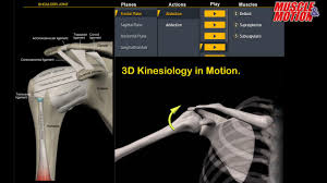 Anatomy Videos Free Download Muscle And Motion Anatomy Android Apps On Google Play
