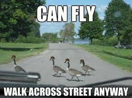 Funny Bird Memes - funny animal memes part 5
