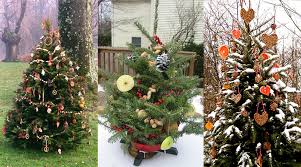 decorate an outdoor tree for animals dot