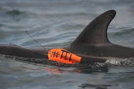 edge cameras reveal the secret life of dolphins