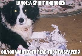 Oh You Dog Meme - funny dog memes imgflip