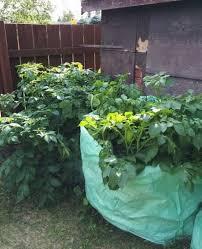 best 25 potato planter ideas on pinterest growing vegetables