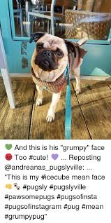 Too Cute Meme Face - and this is his grumpy face too cute reposting this is