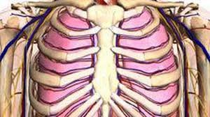 Google Human Anatomy Google Explores The Human Body With Html5