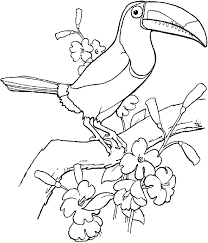 toucan bird coloring page for kids animal coloring pages of