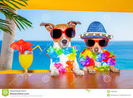 drunk cocktail dogs stock photo image 54849465