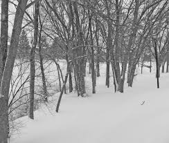 free images landscape tree forest outdoor branch snow cold