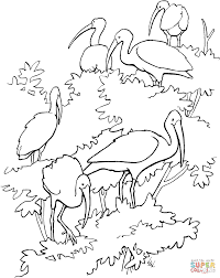 scarlet ibises coloring page free printable coloring pages