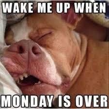 Funny Memes About Monday - dog meme monday dog blog funny dog memes bullwrinkles dog