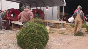 guse christmas tree farm youtube