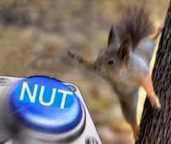 Squirrel Meme - squirrel nut nut button know your meme