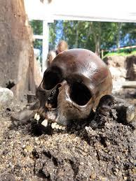 ancient roman bones reveal brutal history the japan times