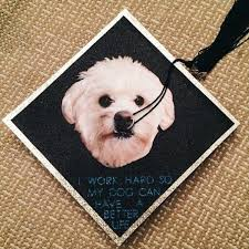 dog graduation cap 17 graduation caps that are probably worth the price of college from