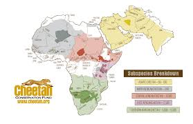 Gambia Africa Map by Genetic Diversity Cheetah Conservation Fund Cheetah