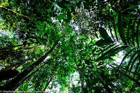 canopy amazon where the amazon river comes from and rain forest trees brazil