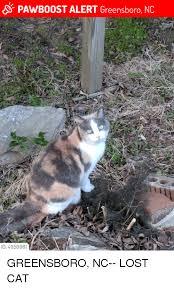 Lost Cat Meme - pawb0ost alert greensboro nc id 4959081 greensboro nc lost cat