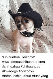 Funny Chihuahua Memes - 25 best memes about chihuahua chihuahua memes