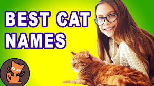 Barn Cat Names 12 Ways To Pick The Perfect Cat Name Best Cat Name List Youtube