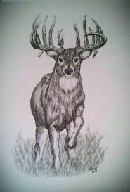 drawn deer pencil pencil and in color drawn deer pencil